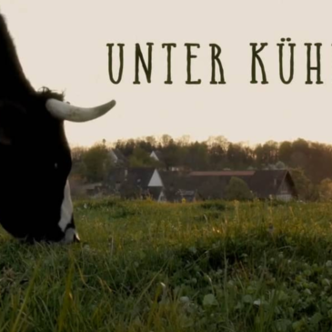 Bruderholzhof-Film: Unter Kühen